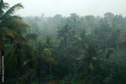 Obraz Coconut palms in the rain, Kerala, India - fototapety do salonu
