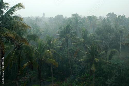 Coconut palms in the rain, Kerala, India - fototapety na wymiar