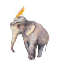 Hand Painted Circus Elephant Isolated On White Background. Watercolor Illustration
