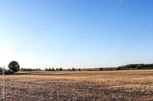 Valokuva  Jahrhundertsommer, verdorrte Felder mit ausgetrockneten Getreidefeldern, Missern