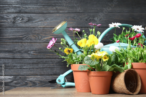 Montage in der Fensternische Garten Blooming flowers in pots and gardening equipment on table, space for text