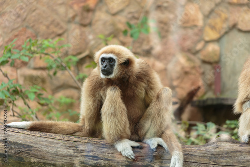 Photo Langur monkey in the aviary of the zoo