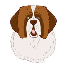 Portrait Of St. Bernard Dog On White Background. Vector Illustration In Simple Style Drawn By Hand.