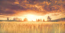 Finnish Barley Field In Sunset...