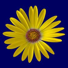 Fine Art Still Life Flower Col...