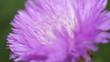 canvas print picture - Фиолетовость