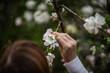 Dziewczyna trzymająca kwiat drzewa w ręce
