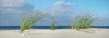Sea Grass At The Baltic Sea Beach - Panorama