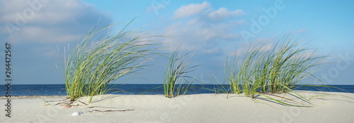 Sea Grass at the Baltic Sea Beach - Panorama