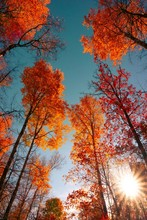 Colorful Trees In Forest