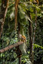 Monkey On Tree Blends In