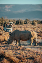 Rhino Eats Grass