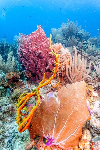 Coral reef with barrel sponge