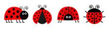Ladybug Ladybird Icon Set Line...