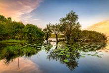 Loire-Atlantique (44), Lac De Grand Lieu, Tréjet, Lever De Soleil Sur Le Lac De Grand Lieu Avec Une Barque Coulée Et Des Nénuphars