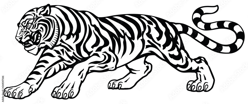 Fototapeta angry tiger in the aggressive attacking pose . Black and white tattoo style vector illustration