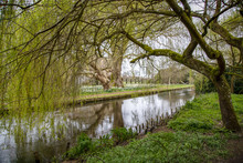 Willow Trees Overhanging A Quiet Trout River In England.