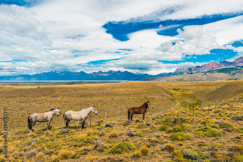 Horses in Patagonian plains