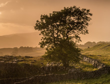 Lone Tree On The Yorkshire Moors