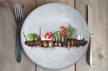 Organic Food Garden Concept