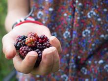 Child Holding Handful Of Blackberries