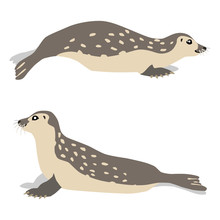Illustration Of Moving And Sitting Common Seals Isolated On White Background. Vector 8 EPS
