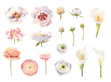 Collection Of Hand Painted Watercolor Flowers