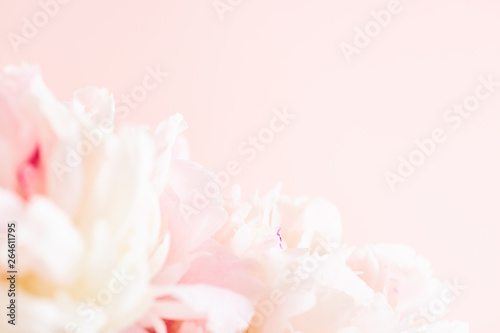 Fototapety, obrazy: Blurred delicate petals of a pink peony. Unfocused abstract floral background