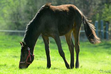 Pferde auf der Weide im Morgenlicht