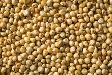Raw Organic Sorghum Grain
