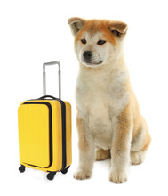 Adorable Little Dog Tourist And Suitcase On White Background