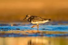 Cute Water Bird. Common Bird R...