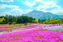 武甲山と芝桜の丘