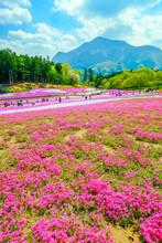 武甲山と芝桜公園(縦)