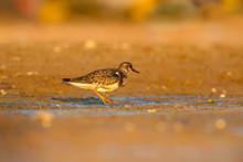 Cute Water Bird. Colorful Wetl...