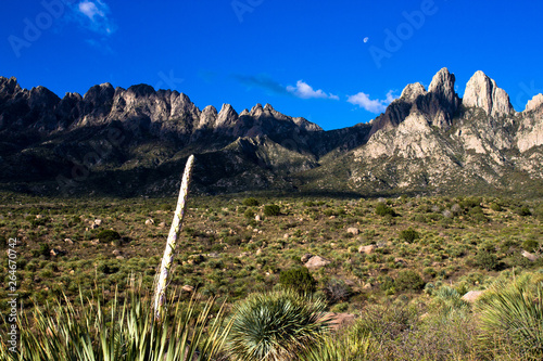 Fotografia, Obraz  Dawn light and yucca plants at Organ Mountains-Desert Peaks National Monument in