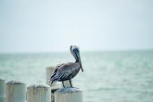 Pelican On Pier Post