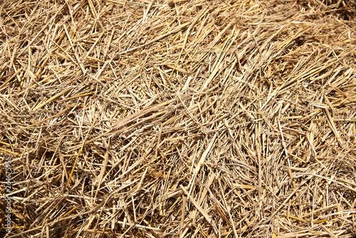 Background pattern of brown dry straw Fototapeta