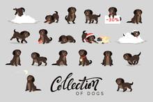 Set Of Cute Dogs Labrador And Retriever