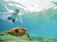 Boy Snorkeling In Ocean Watching Green Sea Turtle Swimming Above Coral Reef