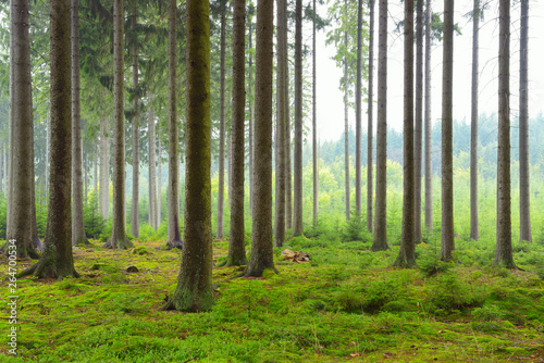 Papiers peints Forets Spruce Forest, Germany, Europe
