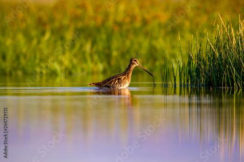Fényképezés  Wonderful light and bird