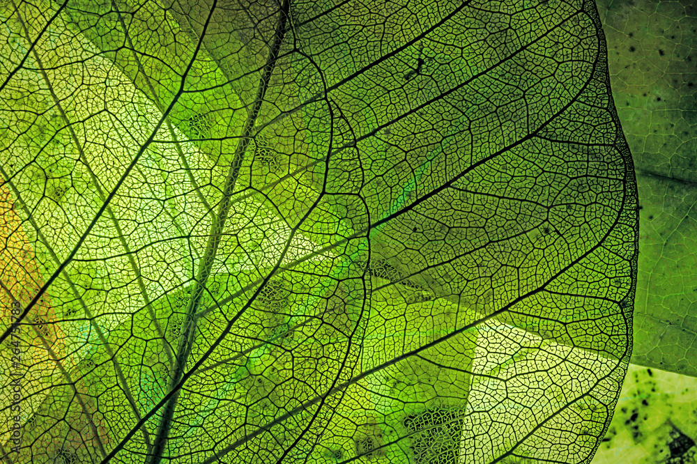 Fototapety, obrazy: autumn leaves in the detail