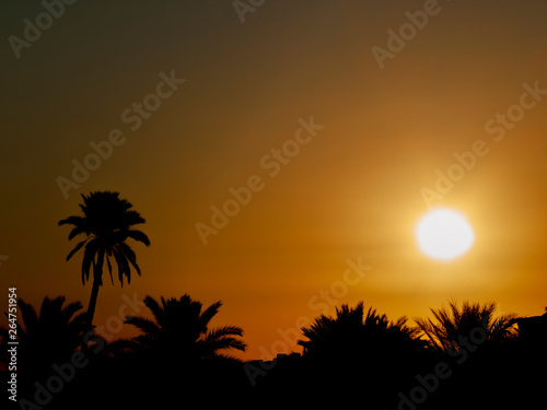 Poster Corail Sunrise showing early morning sun and sky with palm trees in silhouette