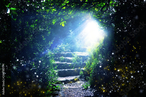 Canvas Print Road and stone stairs in magical and mysterious dark forest with mystical sun light and firefly