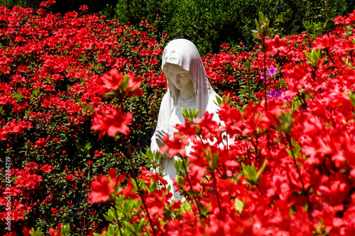 Fotografia Beautiful flowers in full bloom and Virgin Mary statue