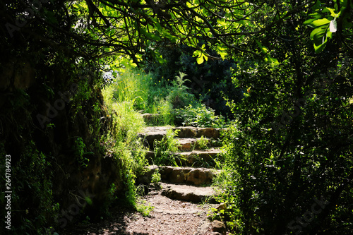 Poster de jardin Nature Road and stone stairs in magical and mysterious dark forest. Fairy tale concept