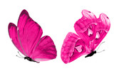 Fototapeta Motyle - Deep pink butterflies. isolated on white background. tropical moths.