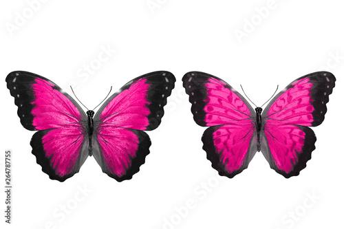 Obraz na plátně  Deep pink butterflies