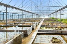 Empty Farm Plant Breeding Greenhouse, View Inside